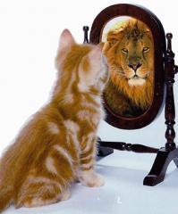gatto_leone_allo_specchio
