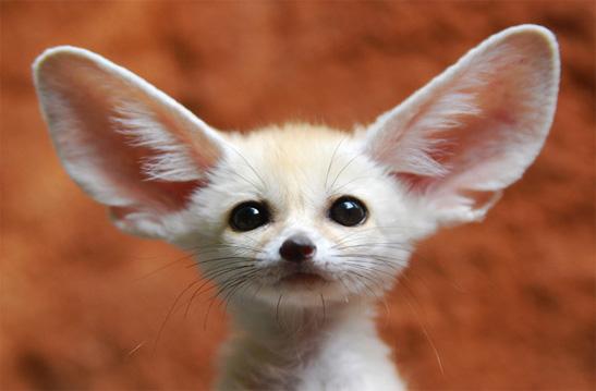 essere tutto orecchi